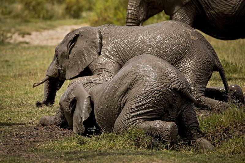large_Elephant_Mudbath_20.jpg