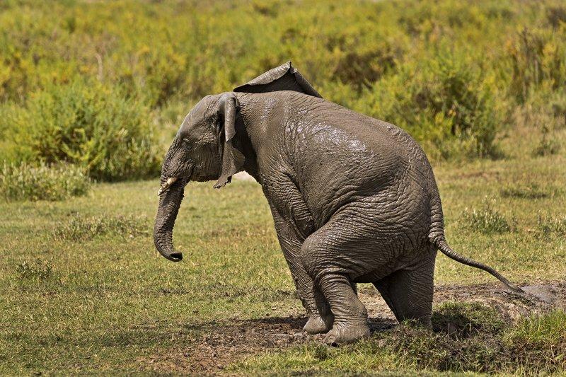 large_Elephant_Mudbath_22.jpg