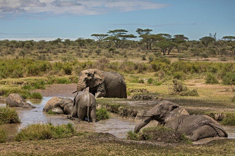 large_Elephant_Mudbath_8.jpg