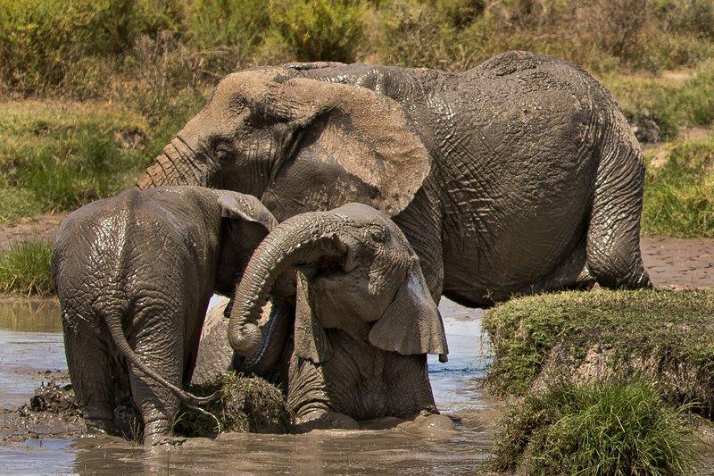 large_Elephant_Mudbath_9.jpg