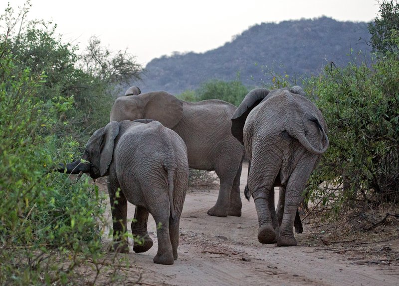 large_Elephant_Road_Block_2.jpg