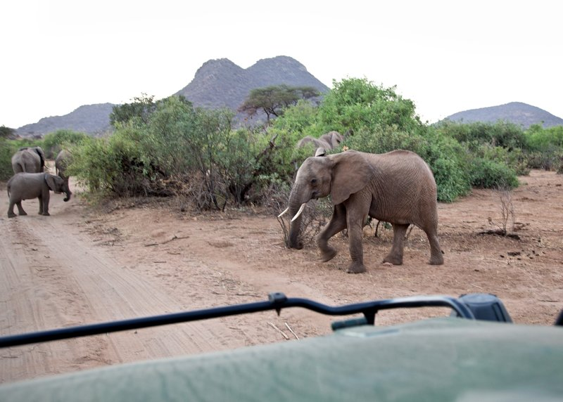 large_Elephant_Road_Block_3.jpg