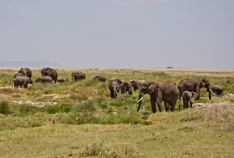 large_Elephant_Traffic_Jam_3.jpg