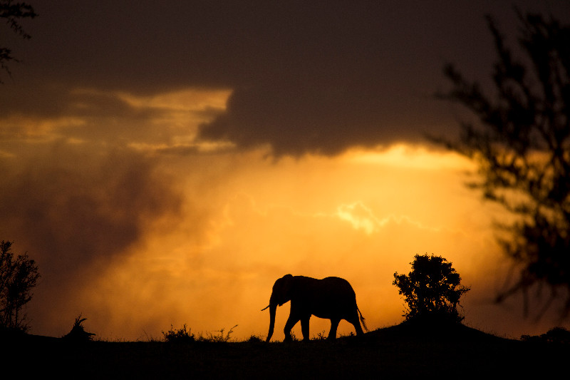 large_Elephant_in_the_Sunset_1.jpg