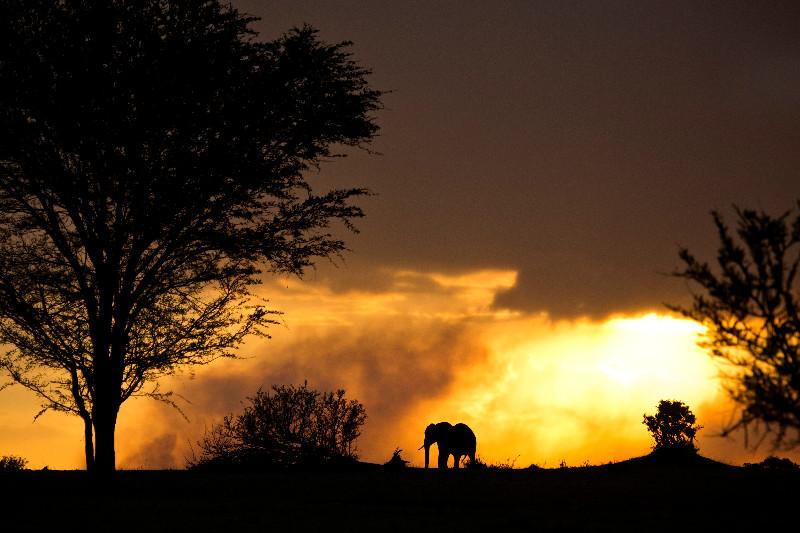 large_Elephant_in_the_Sunset_2.jpg