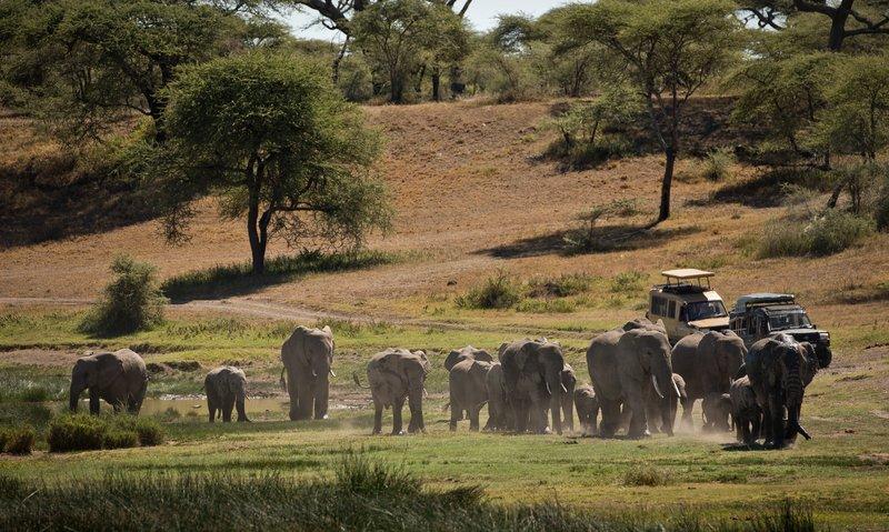 large_Elephants_105.jpg