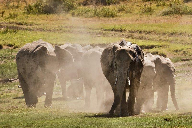 large_Elephants_107.jpg