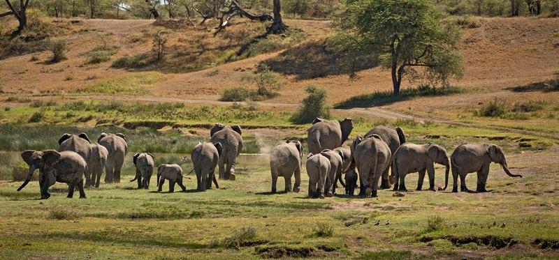 large_Elephants_109.jpg