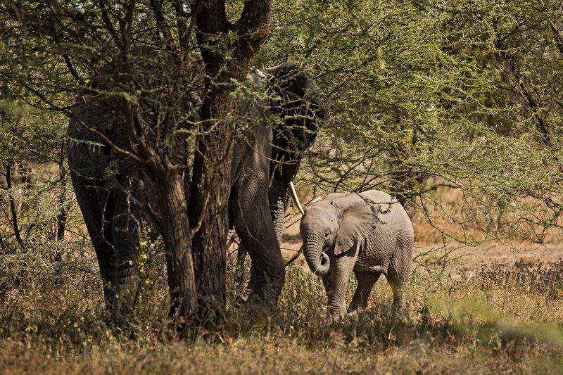 large_Elephants_11.jpg