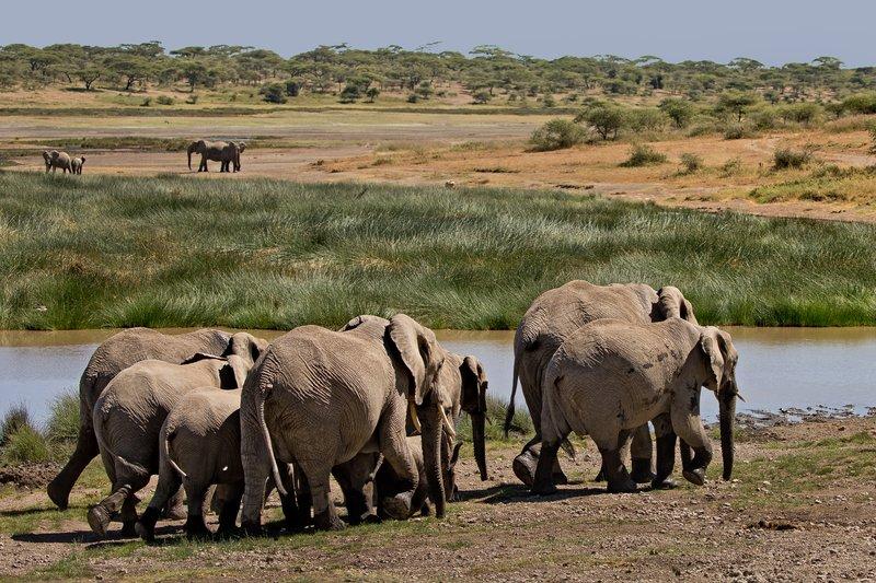 large_Elephants_110.jpg