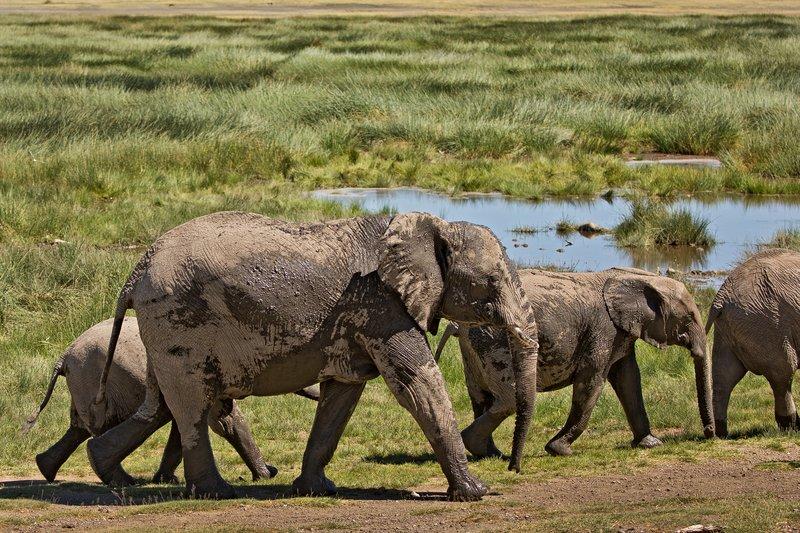 large_Elephants_112.jpg