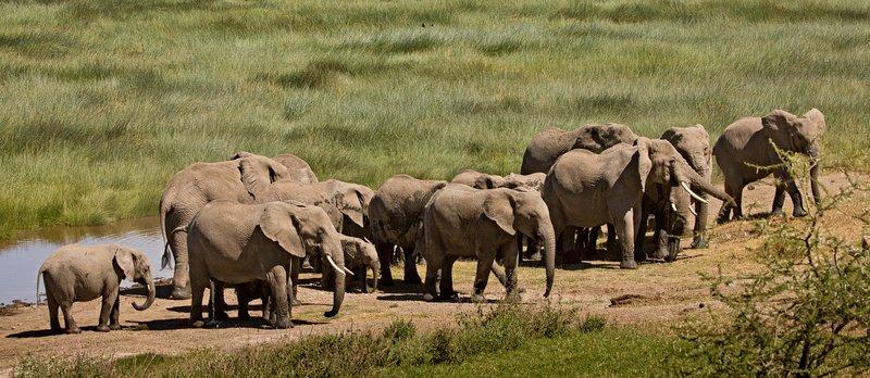 large_Elephants_114.jpg