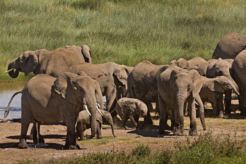large_Elephants_115.jpg