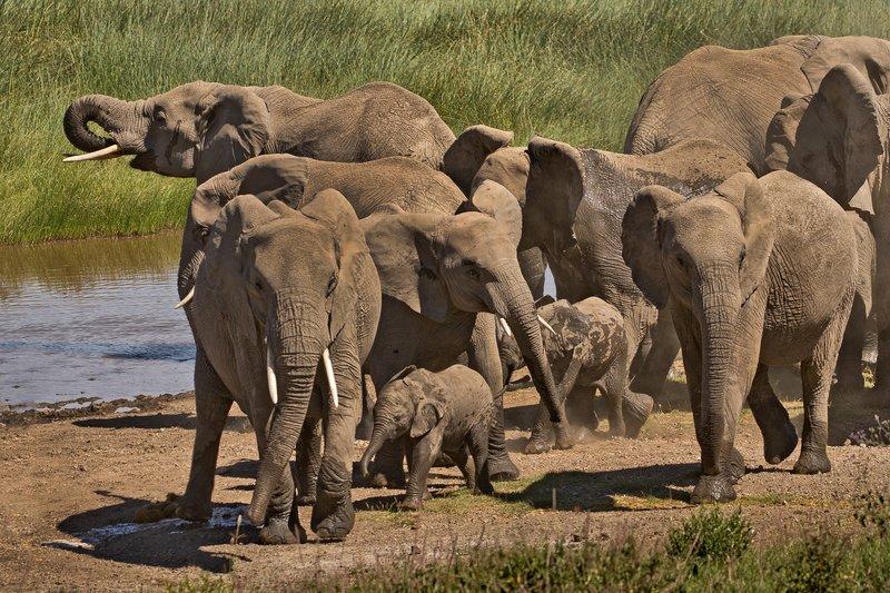 large_Elephants_116.jpg