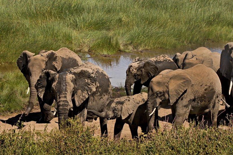 large_Elephants_118.jpg