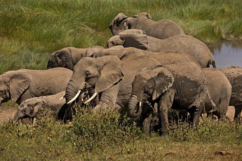 large_Elephants_120.jpg