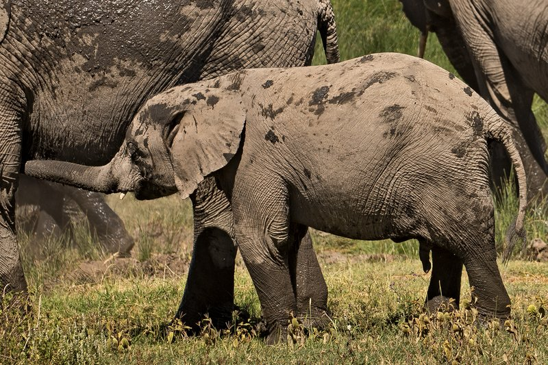 large_Elephants_126.jpg