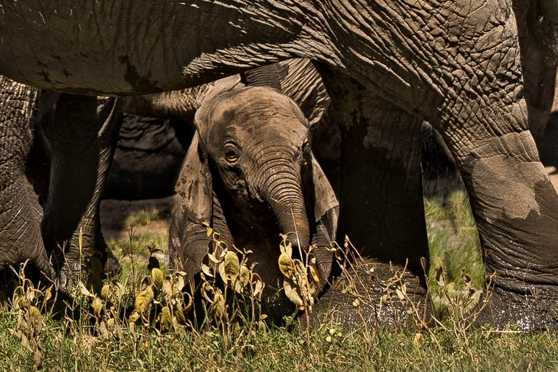 large_Elephants_127.jpg