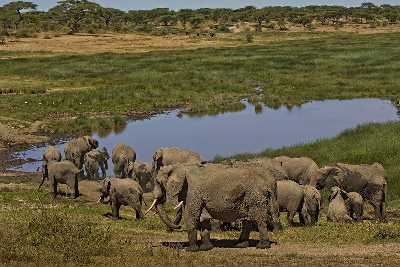 large_Elephants_132.jpg