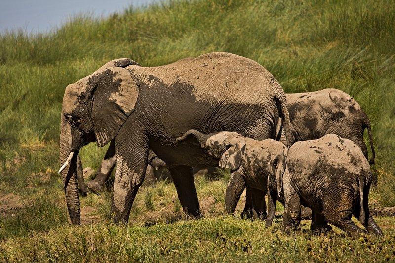large_Elephants_133.jpg