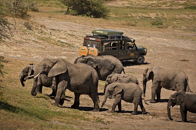 large_Elephants_137.jpg