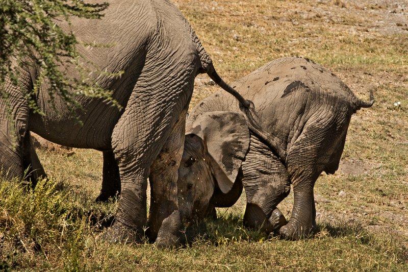 large_Elephants_138.jpg