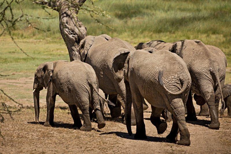 large_Elephants_140.jpg
