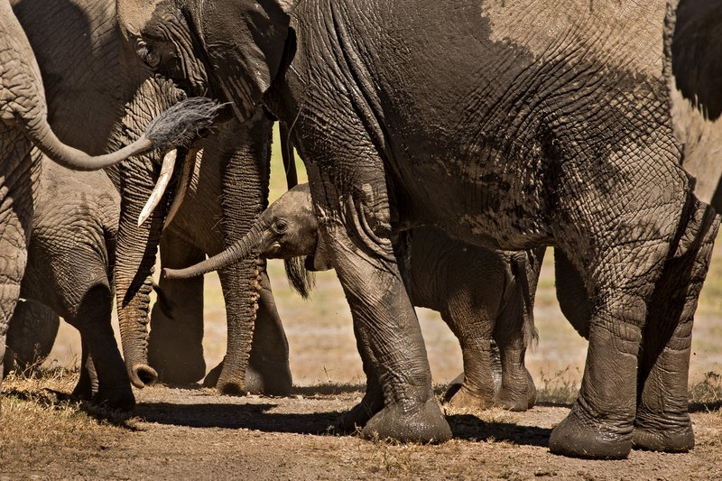 large_Elephants_141.jpg