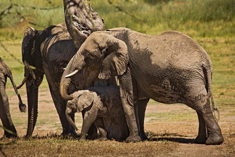 large_Elephants_145.jpg