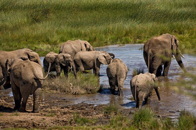 large_Elephants_160.jpg