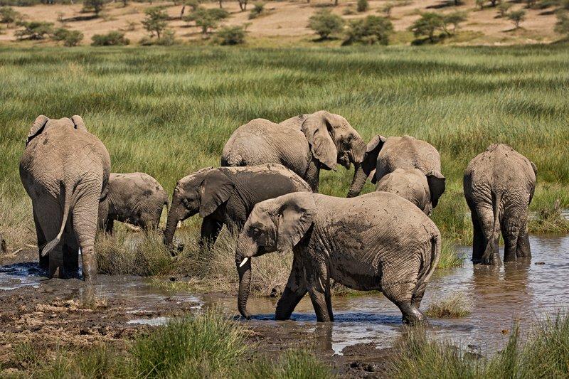 large_Elephants_164.jpg