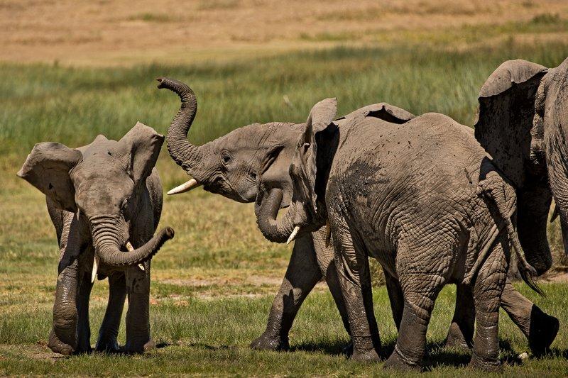 large_Elephants_173.jpg