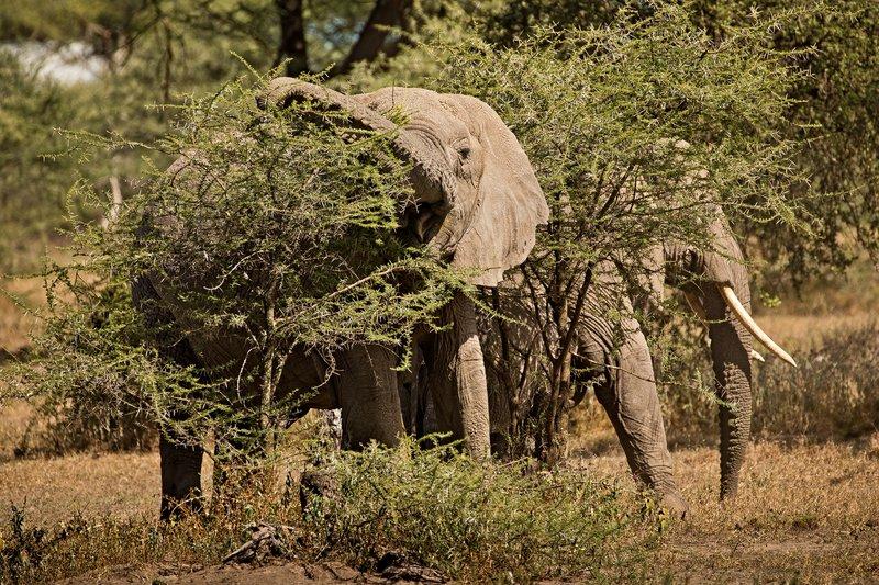 large_Elephants_18.jpg