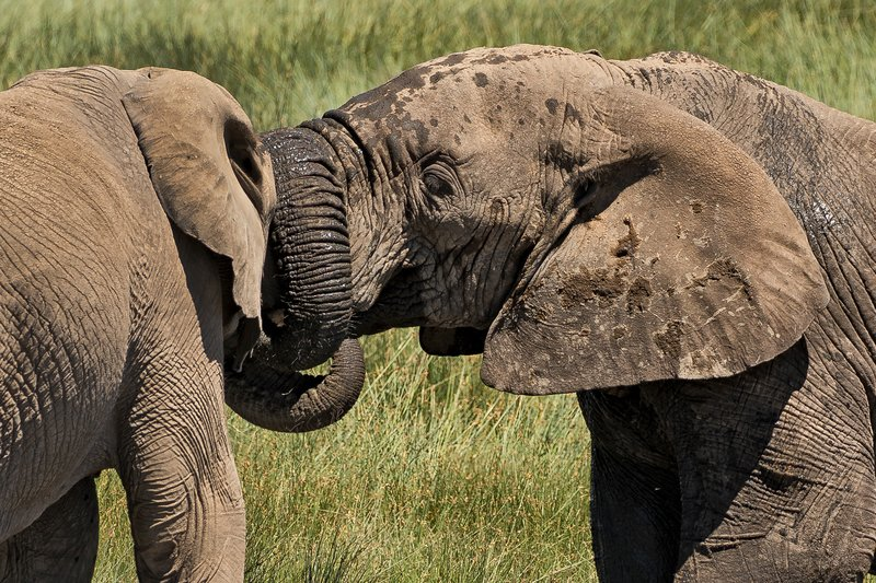 large_Elephants_186.jpg