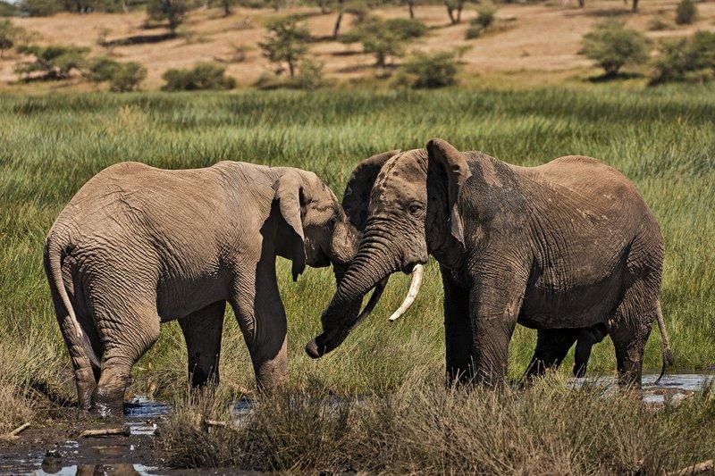 large_Elephants_189.jpg