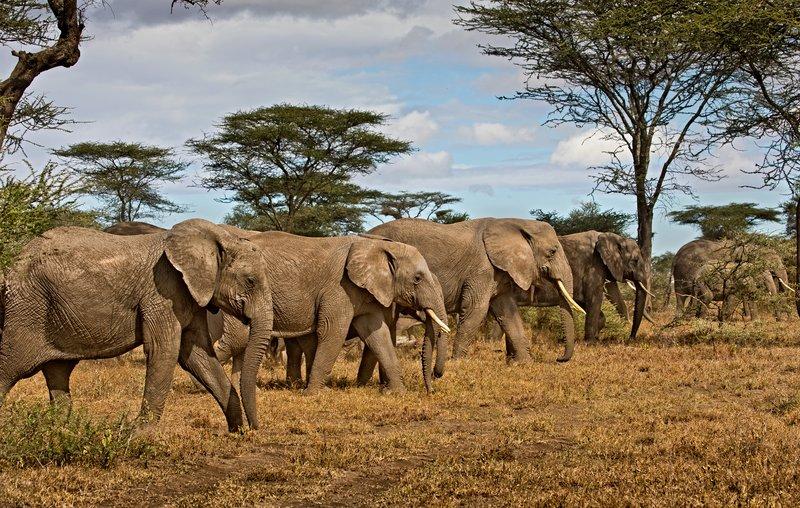 large_Elephants_30.jpg