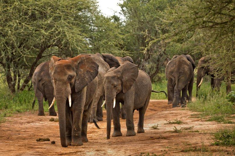 large_Elephants_31.jpg