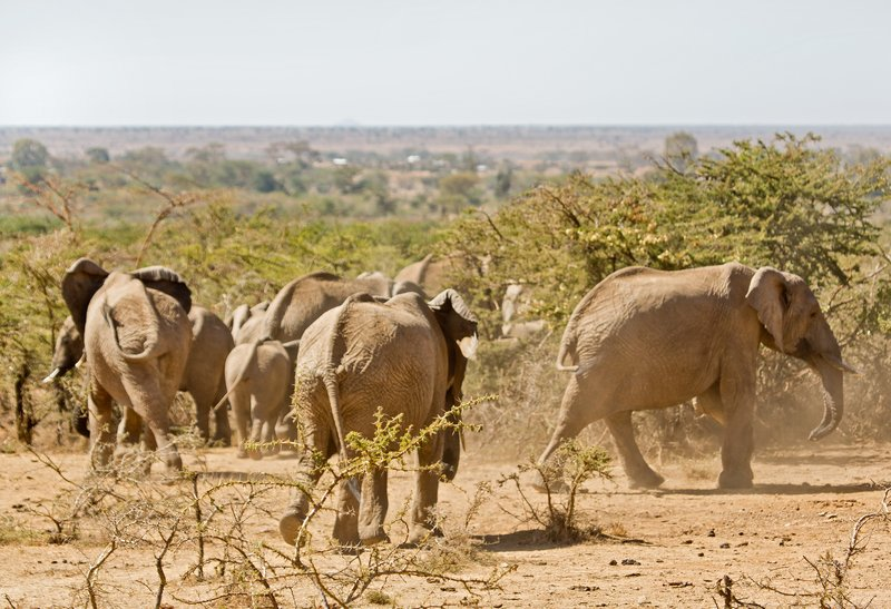 large_Elephants_317.jpg