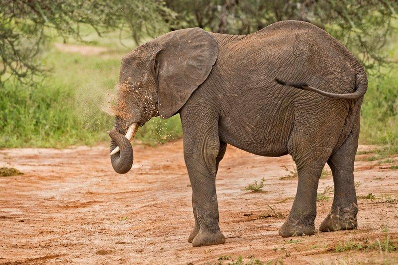 large_Elephants_39.jpg