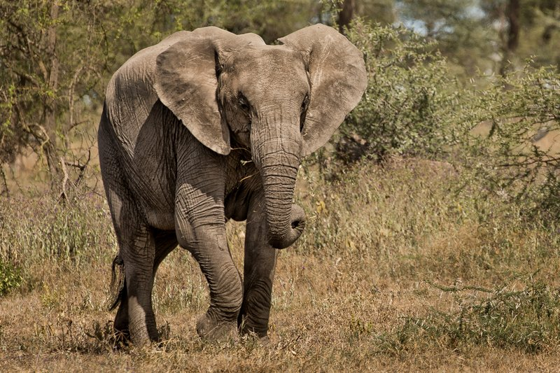 large_Elephants_40.jpg