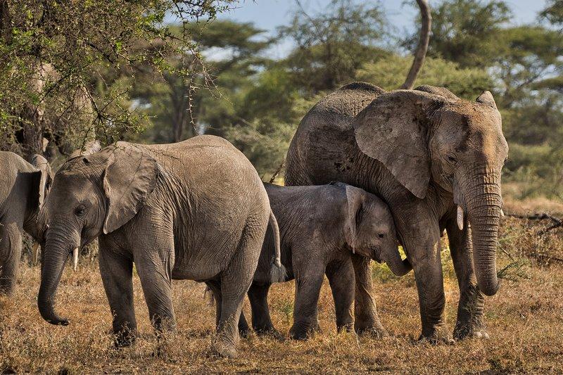 large_Elephants_42.jpg