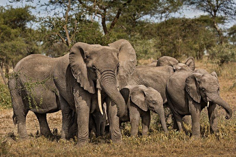 large_Elephants_45.jpg
