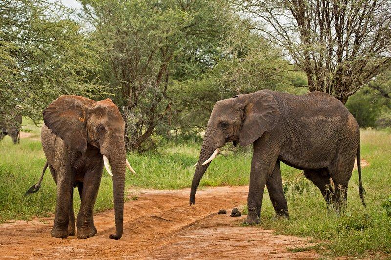 large_Elephants_46.jpg