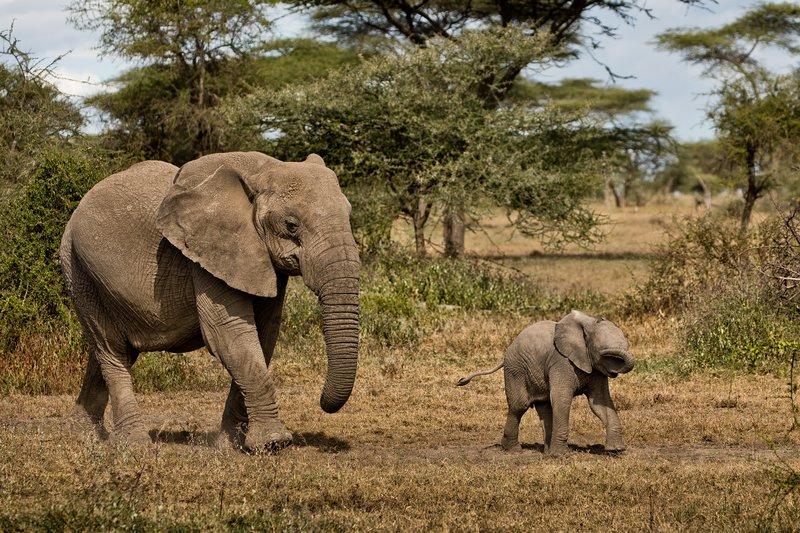 large_Elephants_47.jpg