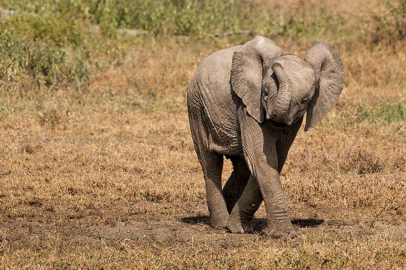 large_Elephants_48.jpg