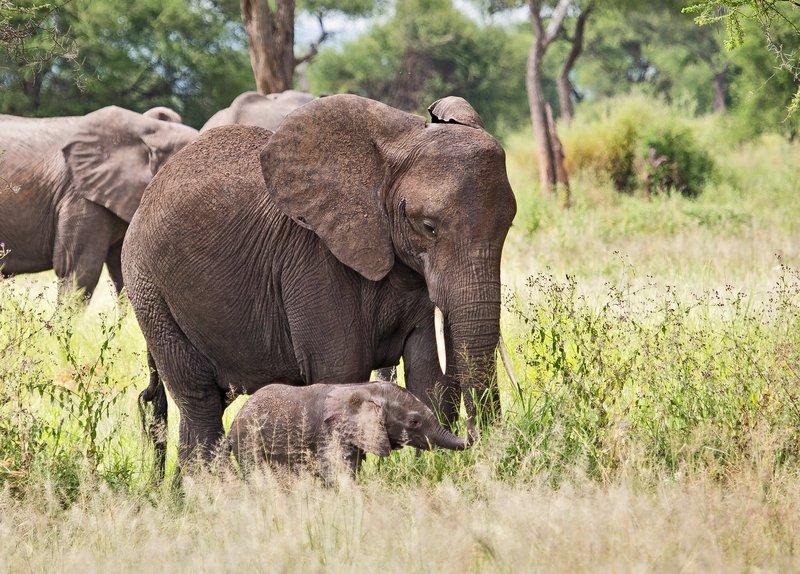 large_Elephants_5-1.jpg