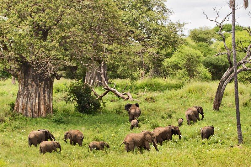 large_Elephants_5-101.jpg