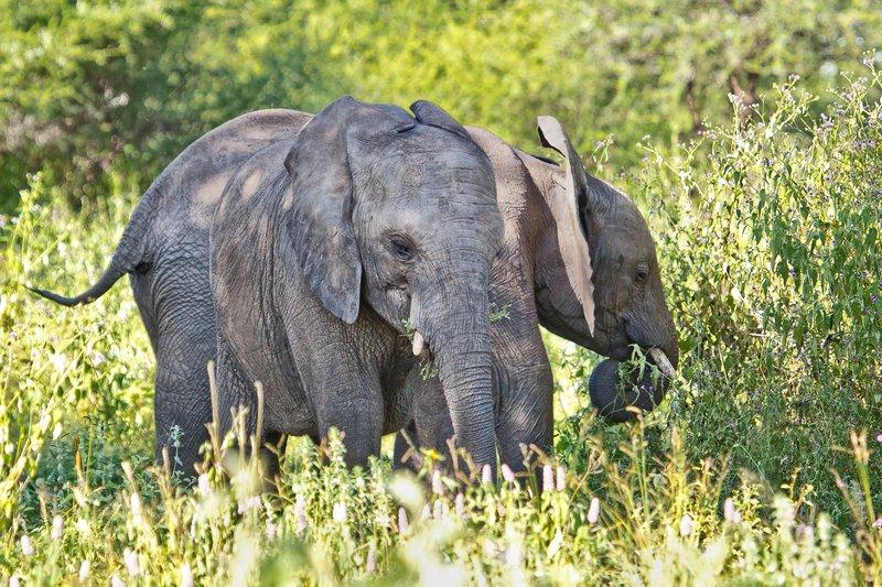 large_Elephants_5-102.jpg