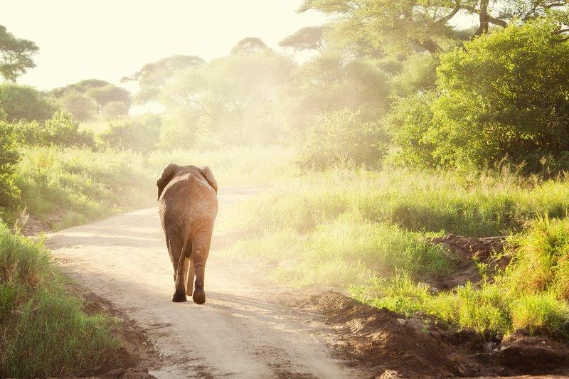 large_Elephants_5-104_Nik.jpg