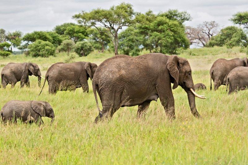 large_Elephants_5-15.jpg